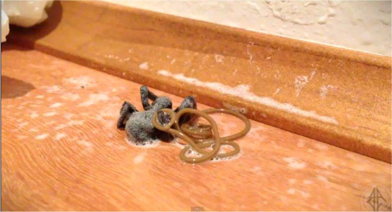 Un ver s'échappe d'une araignée