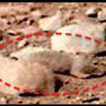 Curiosity: il y a des rats sur Mars
