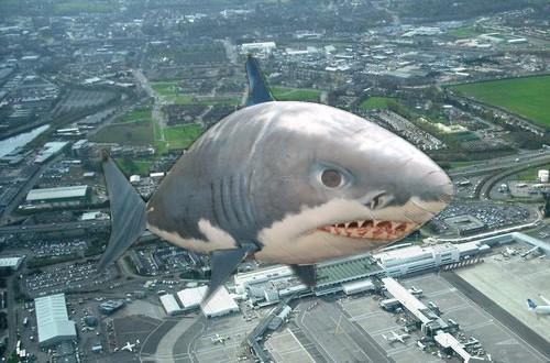 Un requin entre presque en collision avec un avion