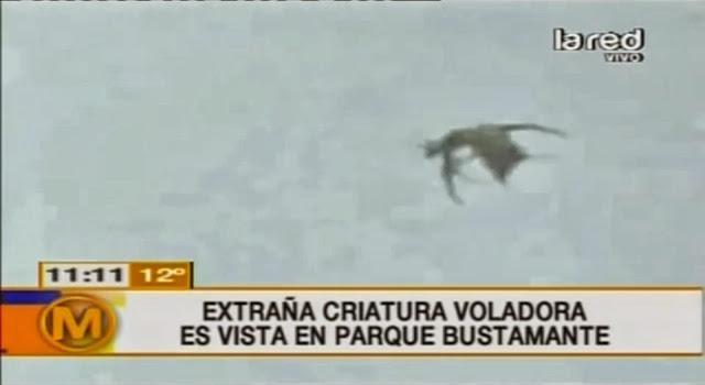 Créature étrange en vol vu au Chili