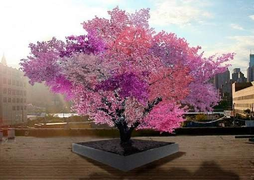 "Insolite: L'arbre ""magique"" capable de produire 40 fruits"