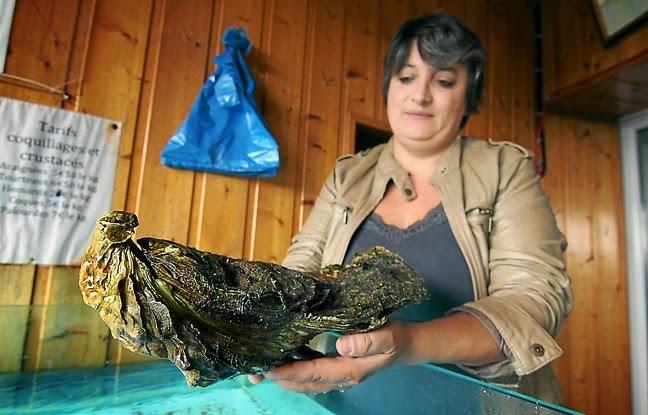 Insolite: Une huître géante pêchée dans la Rance, record du monde battu