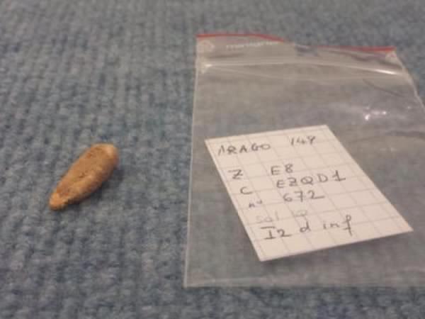 Deux étudiants découvrent une incisive vieille de 560 000 ans à Tautavel !