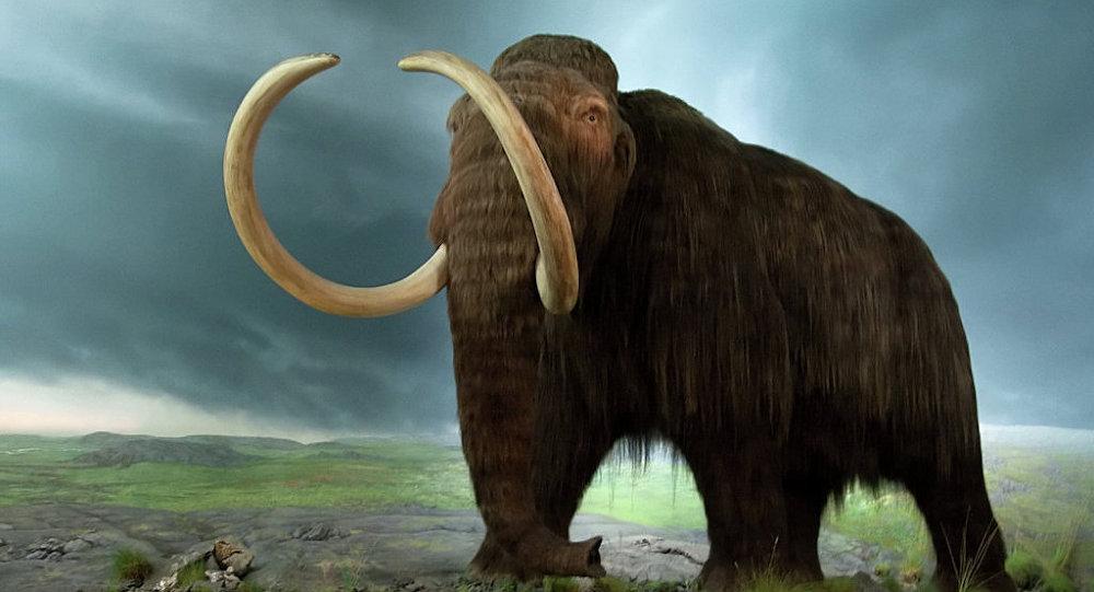 La cause de la disparition des mammouths enfin révélée?