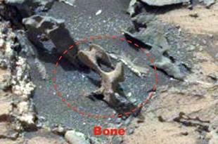 Un gros Os découvert sur Mars près du Rover