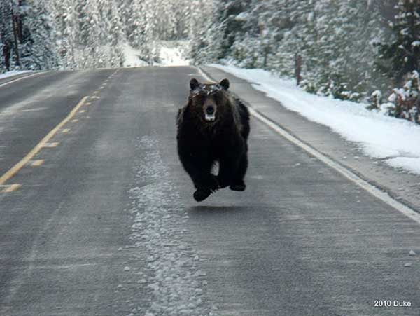 Une fille qui fait du snowboard ne réalise pas qu'elle est pourchassée par un ours