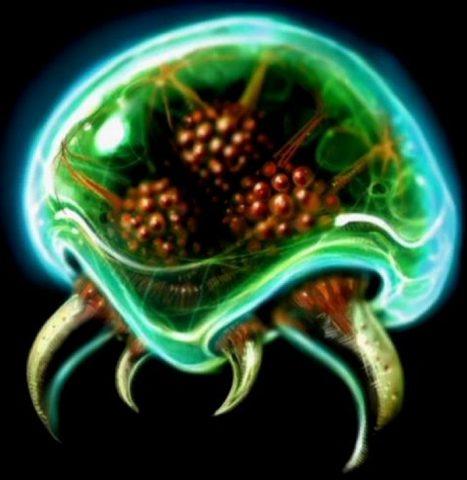 Une méduse d'un autre monde découverte dans l'océan Pacifique