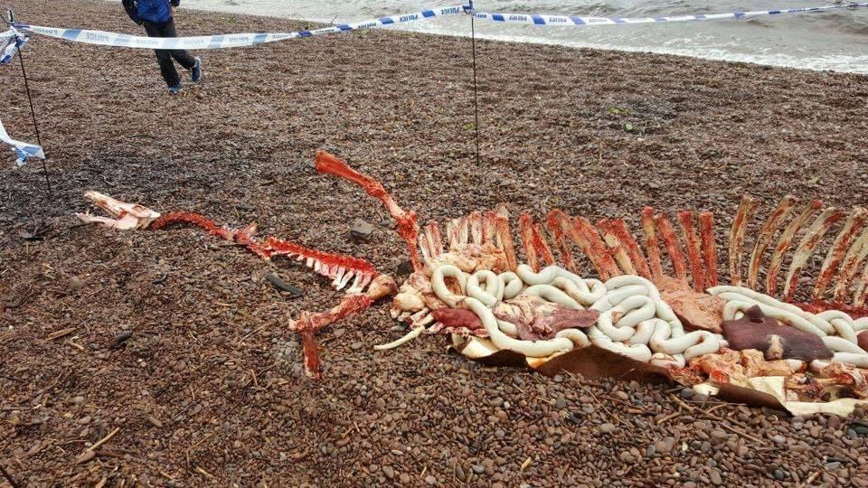 Découverte d'un étrange squelette sur les rives du Loch Ness