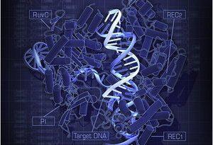Première mondiale : les modifications génétiques artificielles chez l'humain