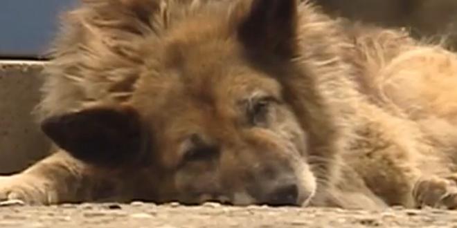 Un Turc sacrifie sa veste pour sauver un chien du froid