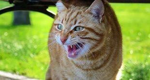 Mon chat me regarde bizarrement… La faute aux hackers russes?