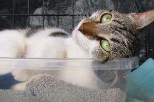 Trafiquant de litière pour chat: la grosse boulette de la police US