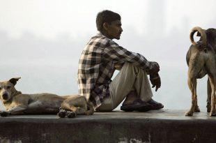 La capitale afghane déclare la guerre aux chiens errants