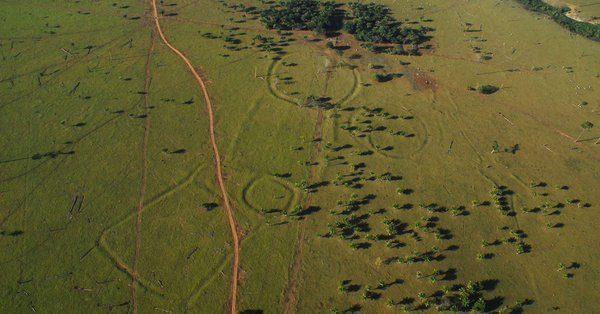 De mystérieux géoglyphes découverts en Amazonie intriguent les scientifiques
