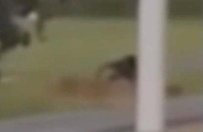 Vidéo: Une Goule filmée dans un cimetière en train de creuser une tombe