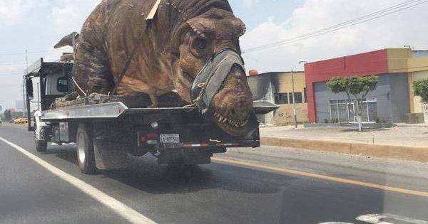 Un T-Rex repéré sur une autoroute aux États-Unis