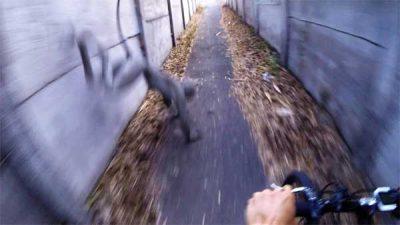 Vidéo: Un Étrange Hybride Chien-Singe pris en vidéo avec une GoPro