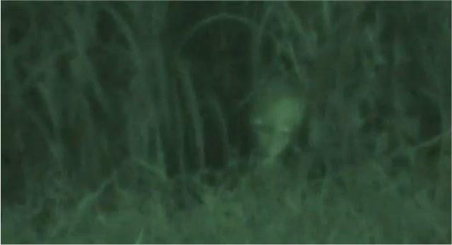 Un alien dans le jardin