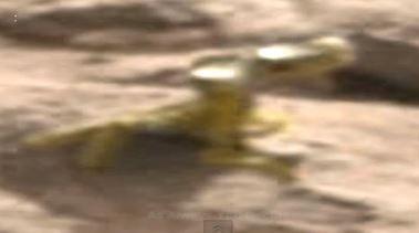 Un lézard sur Mars !?!