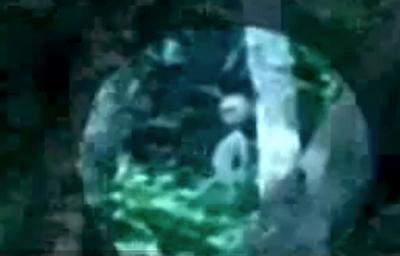 Un extraterrestre filmé au Brésil !