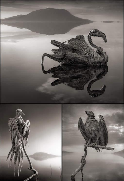 524de20b9b432-brandt-nick-lac-natron-oiseaux-petrifies-3-octobre-2013