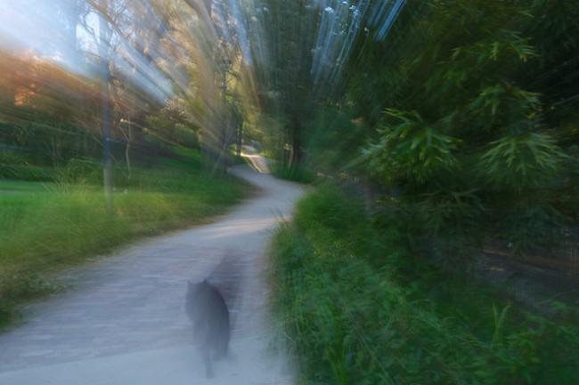 Les infrasons expliqueraient les fantômes et le paranormal