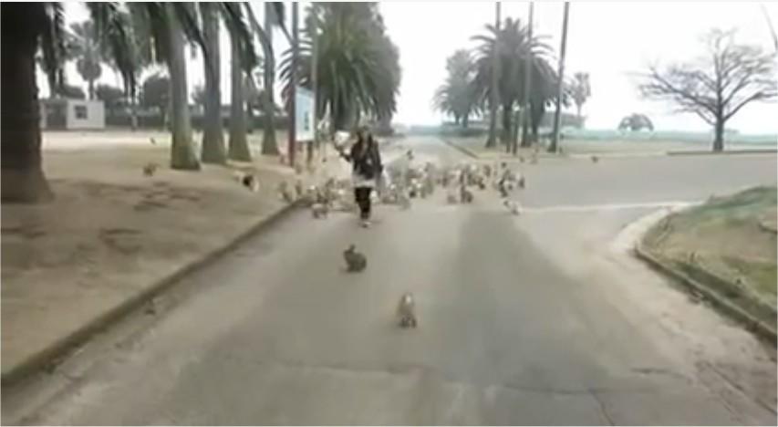 L'Ile des lapins