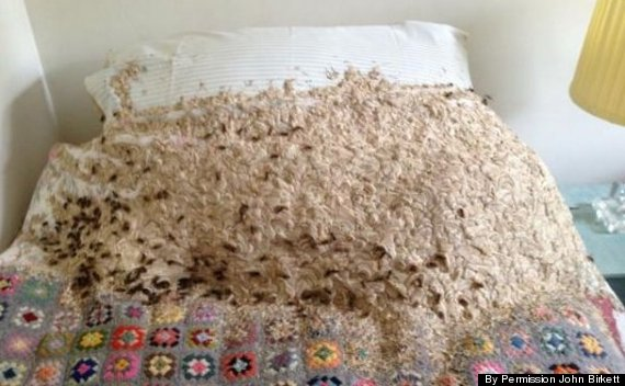 Un nid de guêpes énorme retrouvé dans une chambre d'hôte en Angleterre