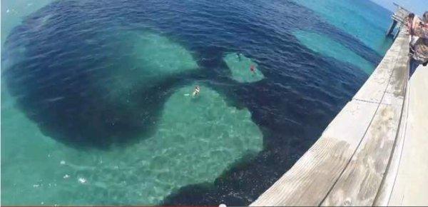 Des millions d'anchois offrent un spectacle époustouflant