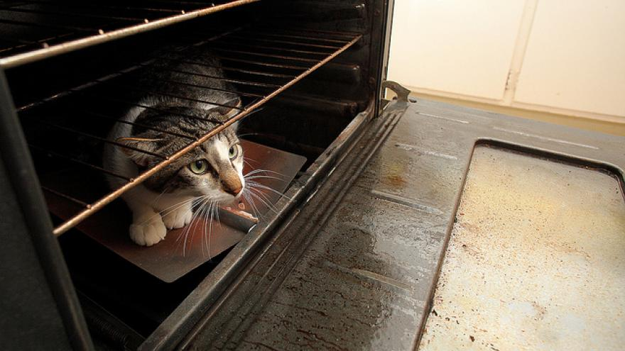Il adoptait des chats à la SPA pour en faire des rôtis