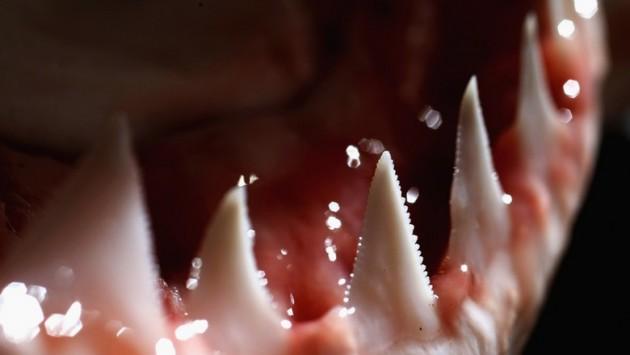 Lair of the Megashark: une grand requin blanc attaque l'équipe de tournage