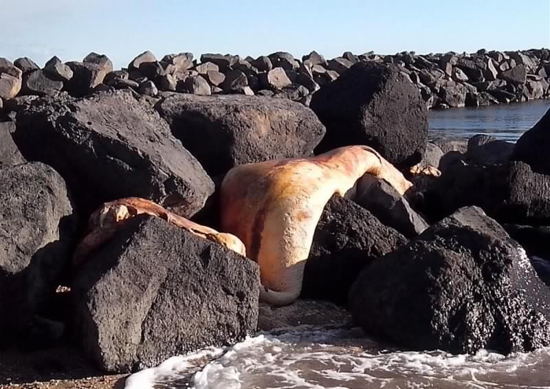 Une espèce inconnue de 4m découverte sur une plage du sud de la France