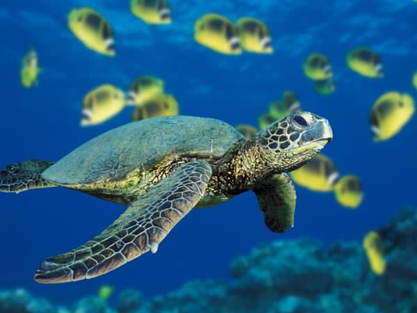 Désertion de la vie dans les océans