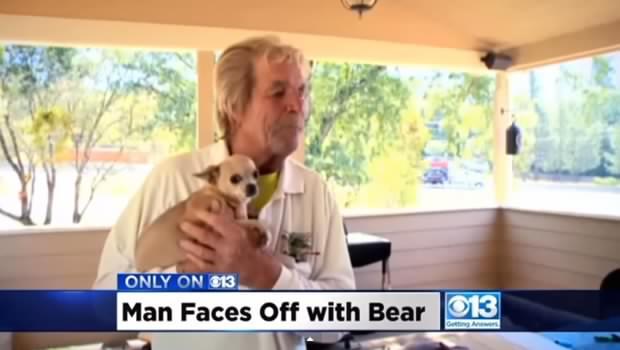 Âgé de 73 ans, il donne un coup de poing à un ours pour défendre son chihuahua