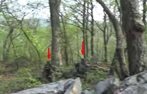Un homme déclare avoir filmé une femelle Bigfoot à « la poitrine généreuse »