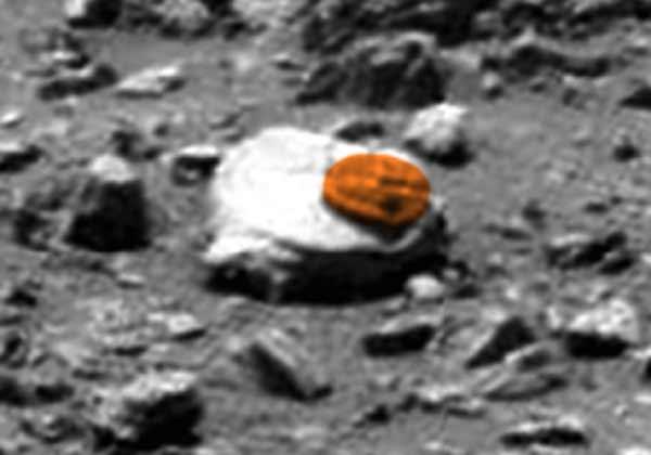 Une créature trilobite découverte sur Mars
