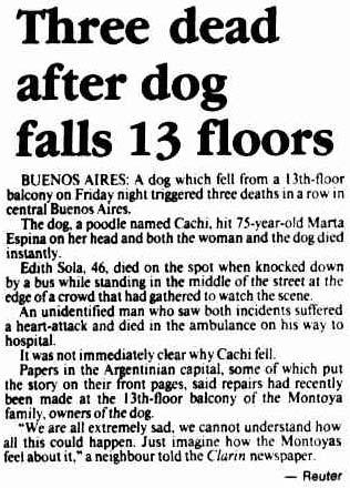 Un chien fait une chute du 13ème étage et tue 3 personnes