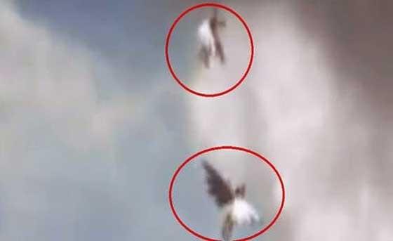 Deux étranges créatures ailées ou anges ont été filmées au Brésil