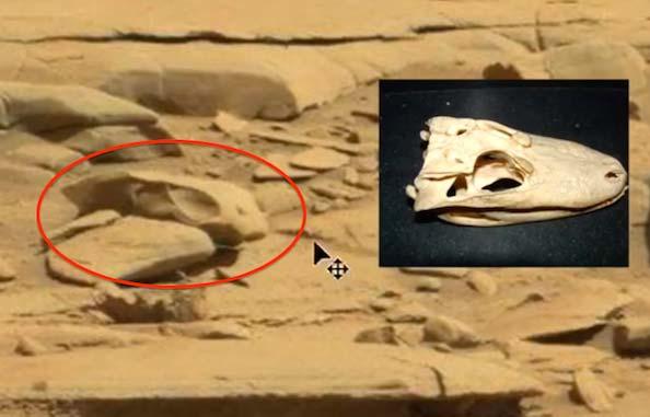 Un crâne d'un T-Rex Alien sur Mars