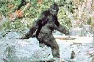 Le Bigfoot