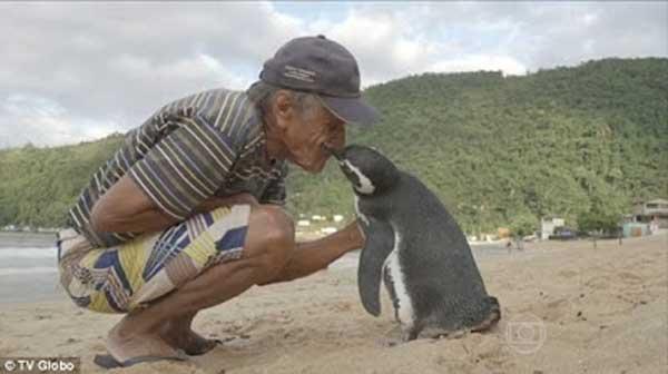 L'incroyable histoire d'un pingouin qui voyage 8000 Km chaque année pour retrouver l'homme qui l'a sauvé