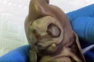 Une créature Extraterrestre découverte dans un jardin en Arizona