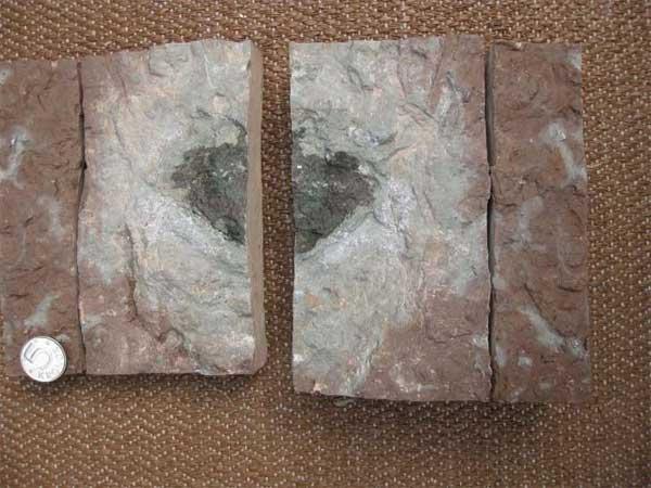 Des scientifiques ont découvert une nouvelle sorte de météorite qui pourrait changer l'histoire du système solaire