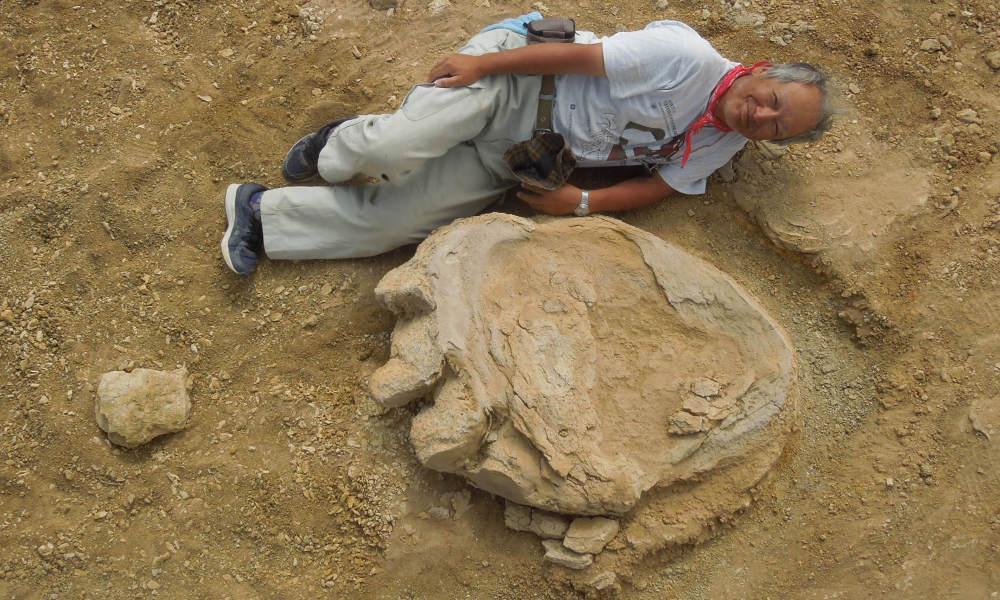 Titanosaure : empreinte géante découverte en Mongolie