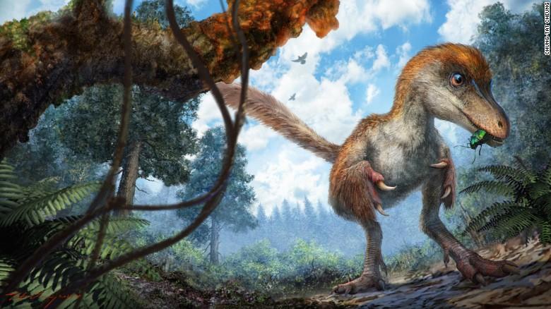Un petit coelurosaure dans la forêt.