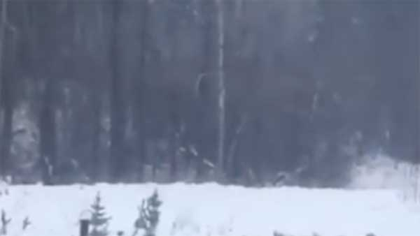 Vidéo: Des sons terrifiants enregistrés dans une forêt canadienne. Qu'est-ce que c'est?