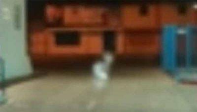 Vidéo: Une entité filmée à l'extérieur d'un hôpital au Mexique.