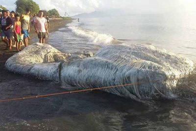 Vidéos: Une créature très bizarre retrouvée échouée sur une plage aux Philippines