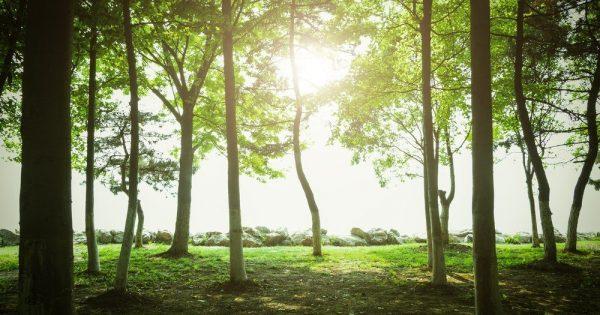 Des scientifiques découvrent que les arbres possèdent un « battement de coeur »