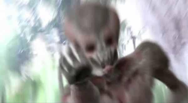 Vidéo: Un extraterrestre agresse un homme dans une forêt japonaise